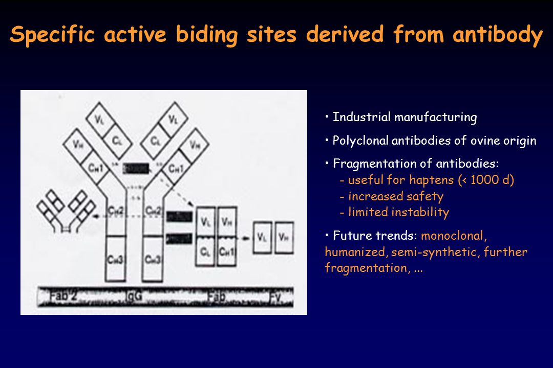 Specific active biding sites derived from antibody
