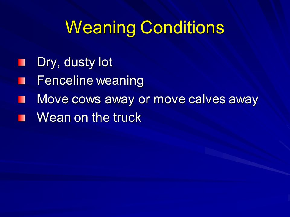 Weaning Conditions Dry, dusty lot Fenceline weaning