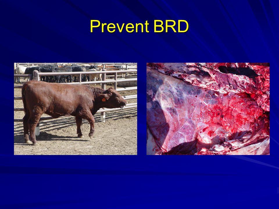 Prevent BRD