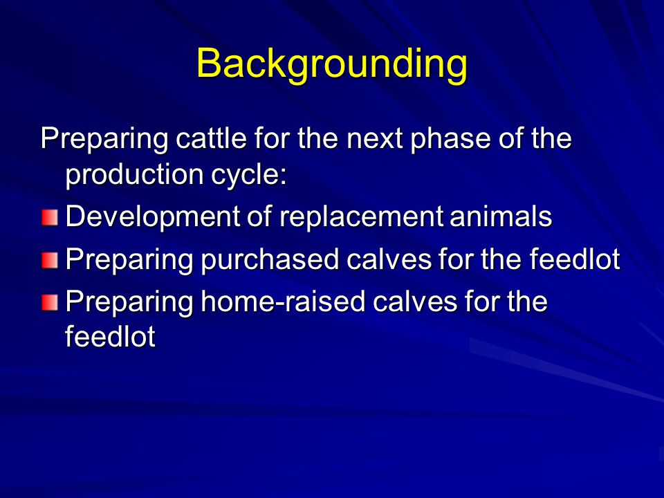 Backgrounding Preparing cattle for the next phase of the production cycle: Development of replacement animals.