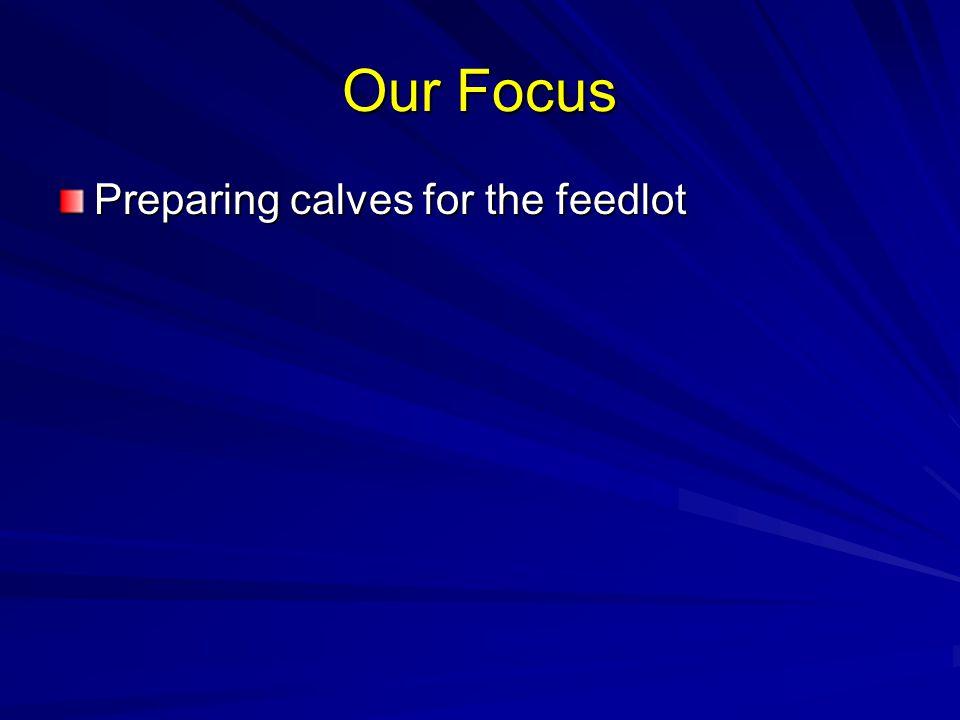 Our Focus Preparing calves for the feedlot