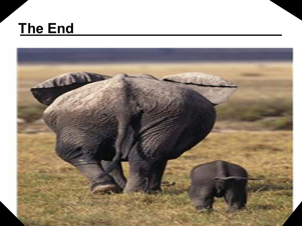 The End Mother elephant and baby elephant walking away signifies the end of the presentation. .
