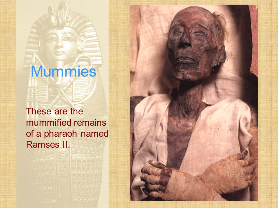 Mummies These are the mummified remains of a pharaoh named Ramses II.
