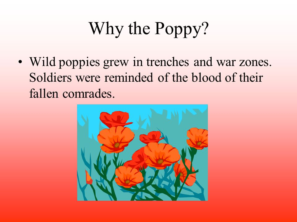 Why the Poppy. Wild poppies grew in trenches and war zones.