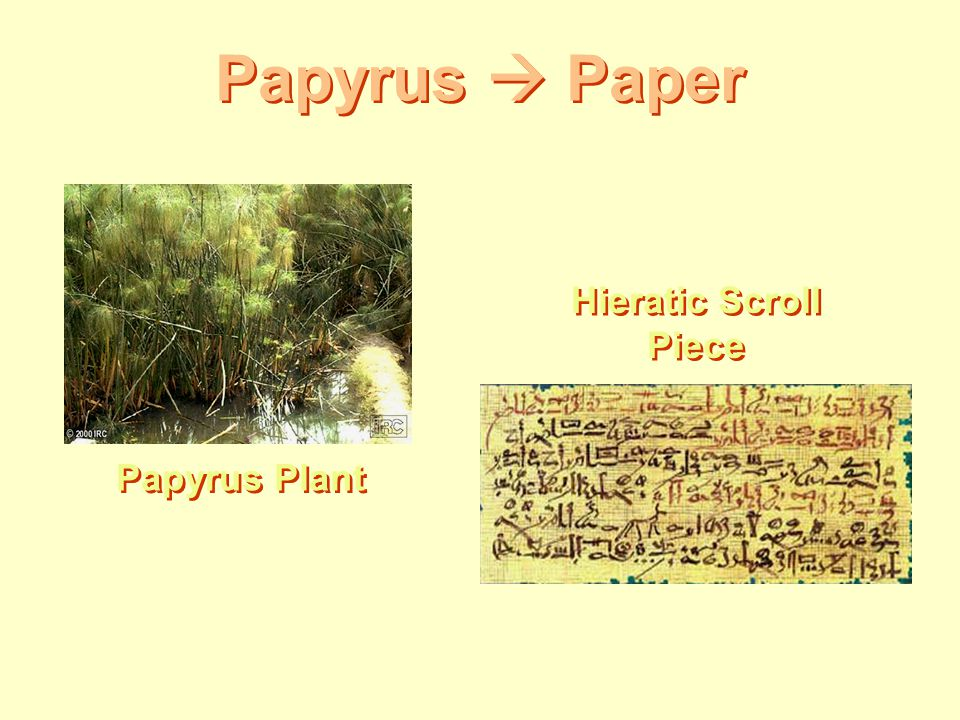 Papyrus  Paper Hieratic Scroll Piece Papyrus Plant