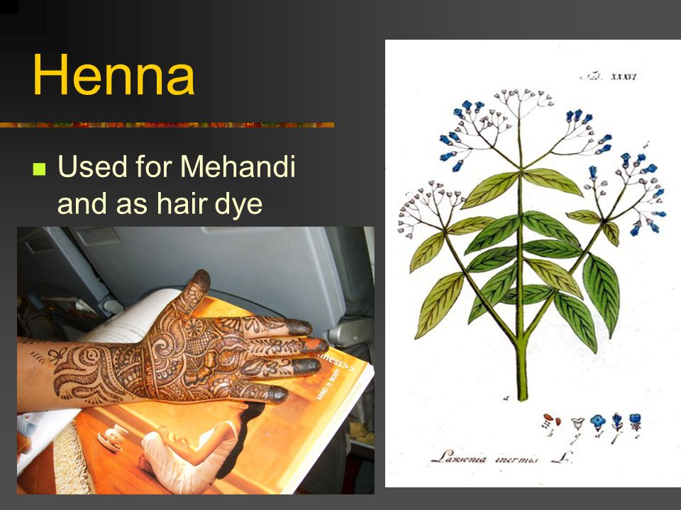 Henna Used for Mehandi and as hair dye