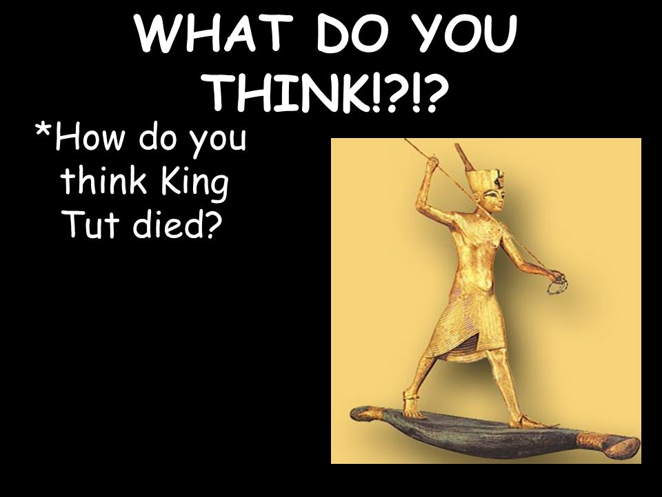 WHAT DO YOU THINK! ! *How do you think King Tut died