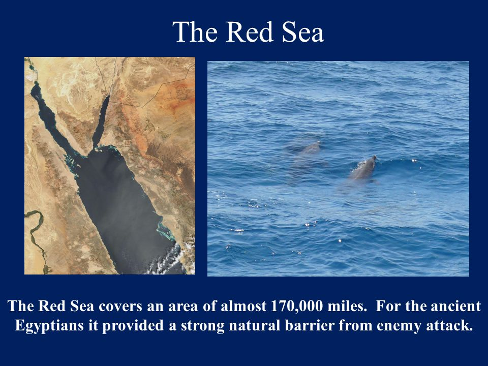 The Red Sea The Red Sea covers an area of almost 170,000 miles.