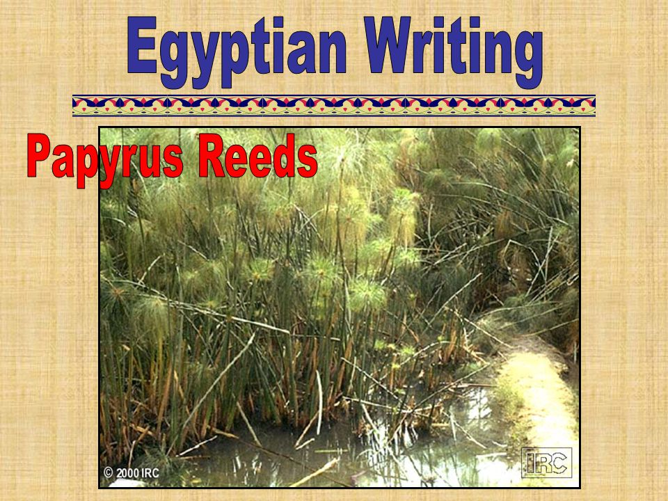 Egyptian Writing Papyrus Reeds
