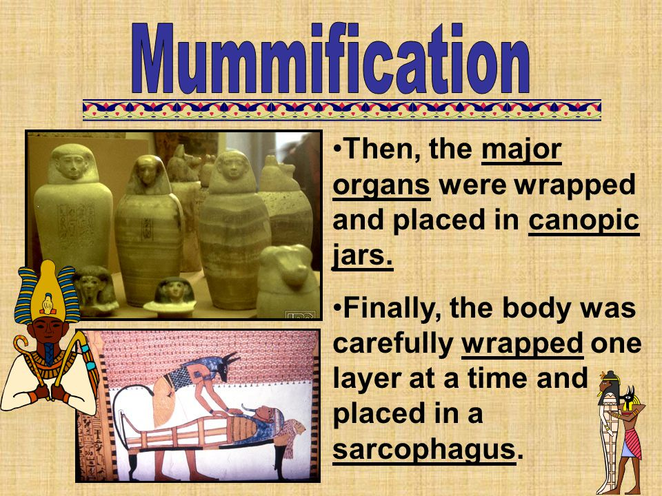 Mummification Then, the major organs were wrapped and placed in canopic jars.