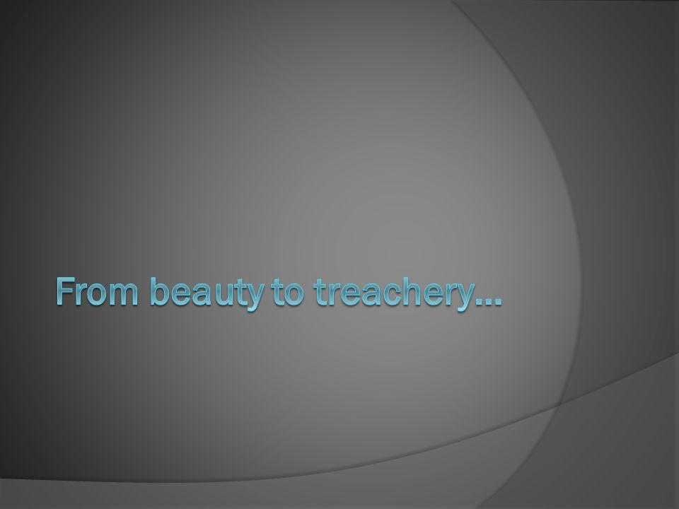 From beauty to treachery…