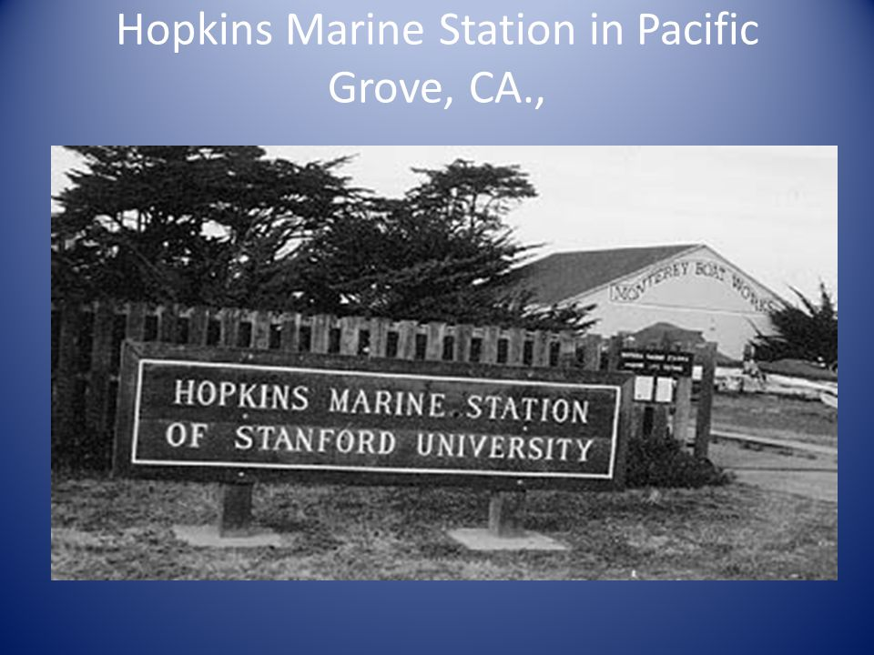 Hopkins Marine Station in Pacific Grove, CA.,