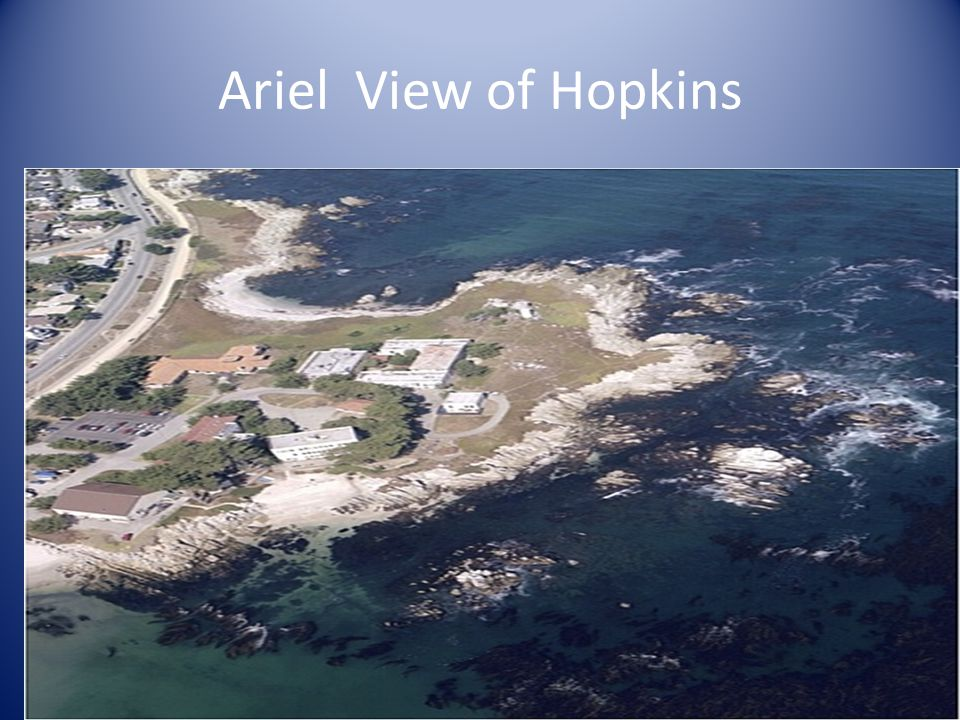 Ariel View of Hopkins