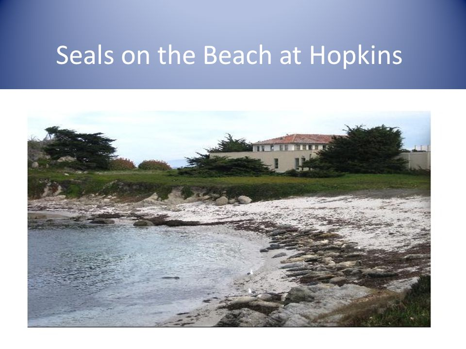 Seals on the Beach at Hopkins