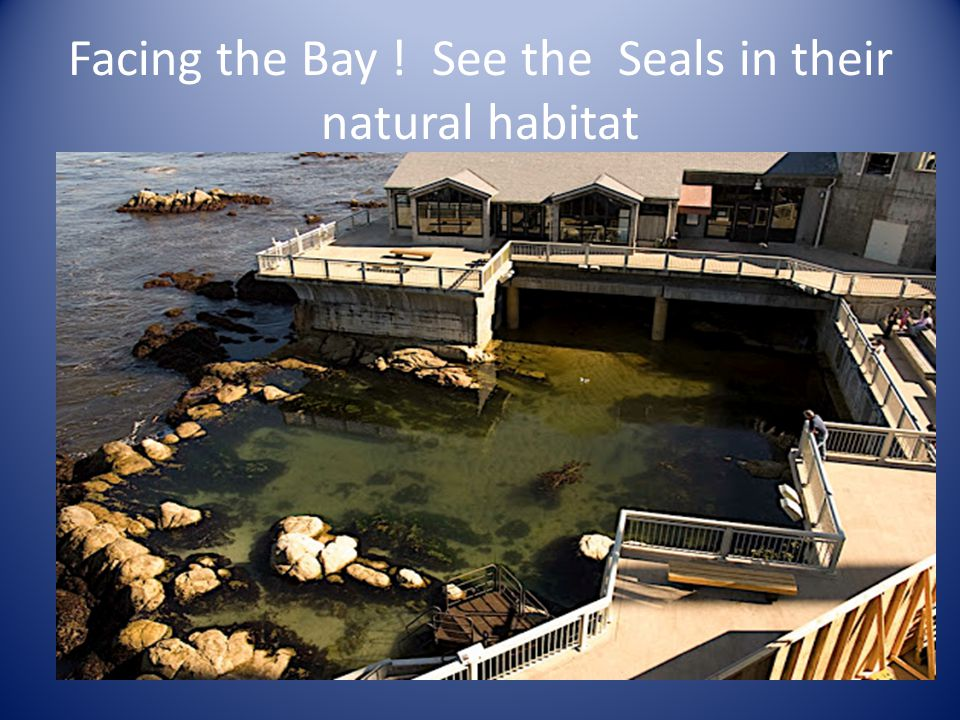 Facing the Bay ! See the Seals in their natural habitat