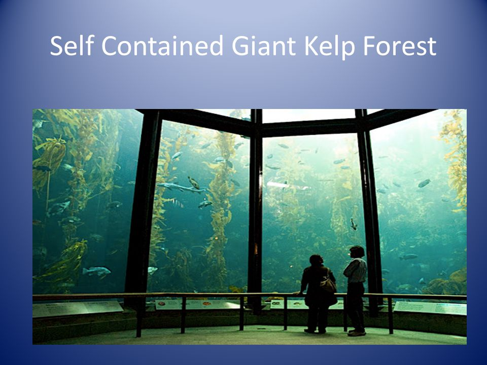 Self Contained Giant Kelp Forest