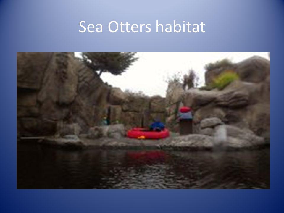 Sea Otters habitat