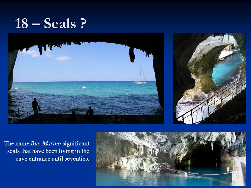18 – Seals .
