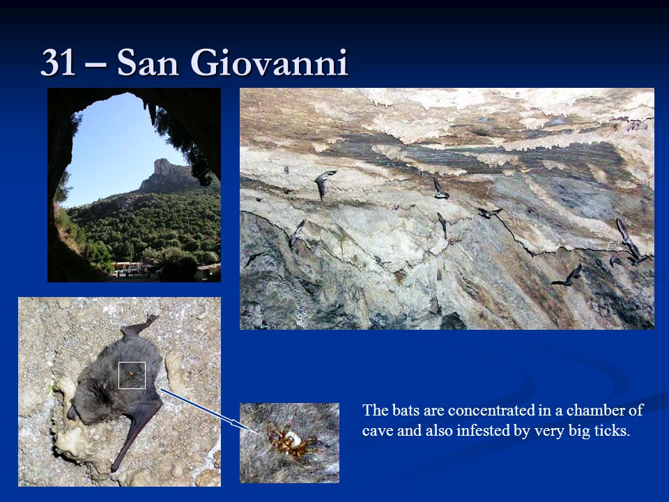 31 – San Giovanni The bats are concentrated in a chamber of cave and also infested by very big ticks.