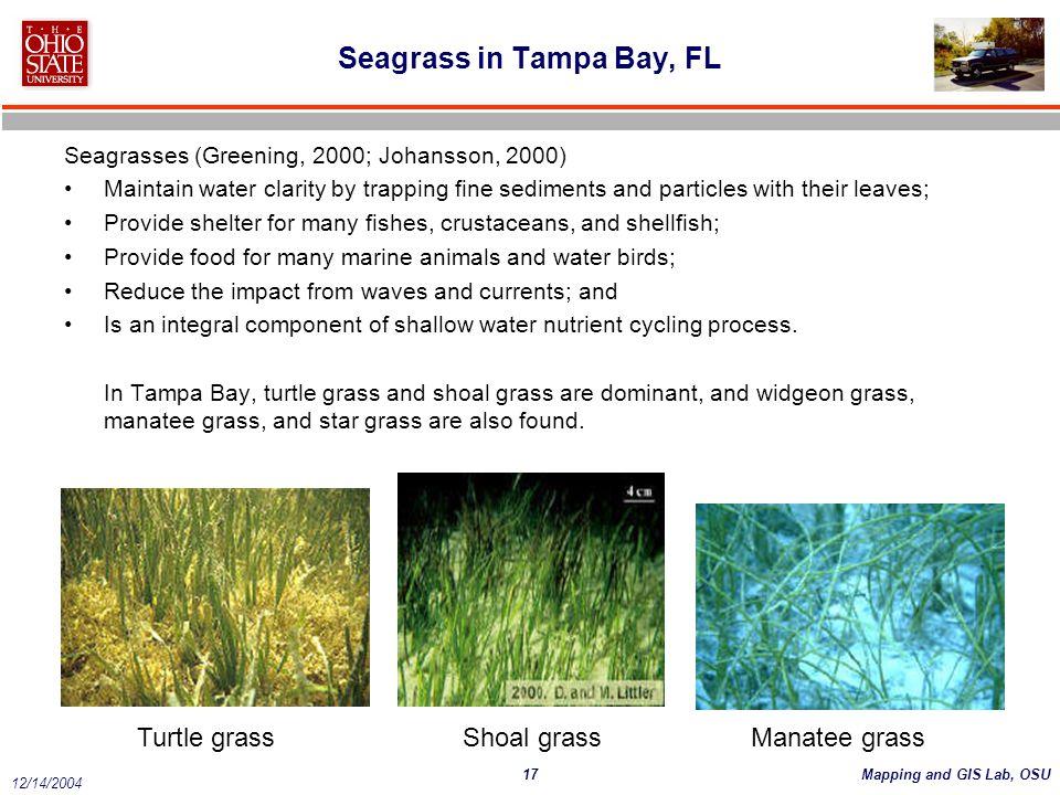 Seagrass in Tampa Bay, FL