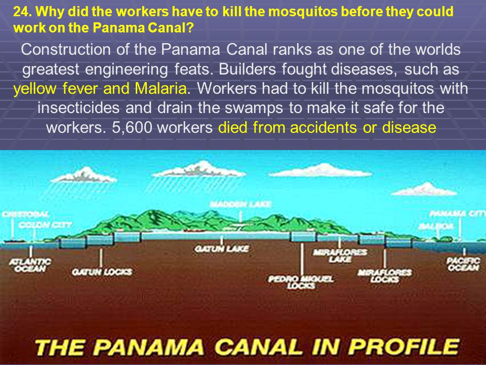 24. Why did the workers have to kill the mosquitos before they could work on the Panama Canal