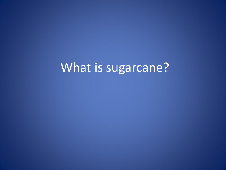 What is sugarcane