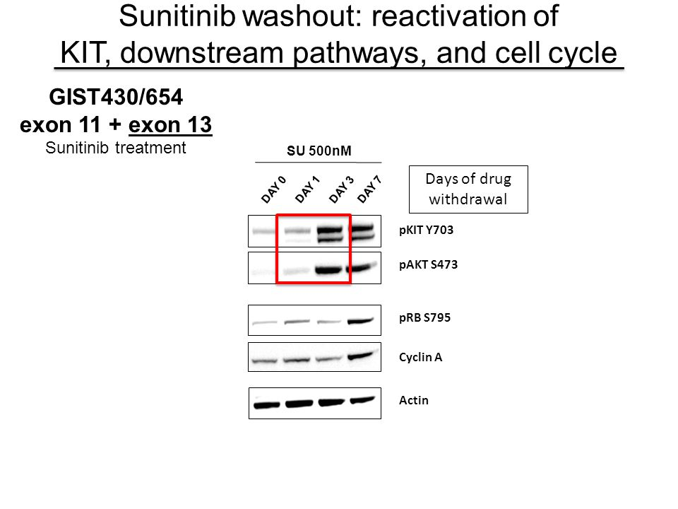 Sunitinib washout: reactivation of