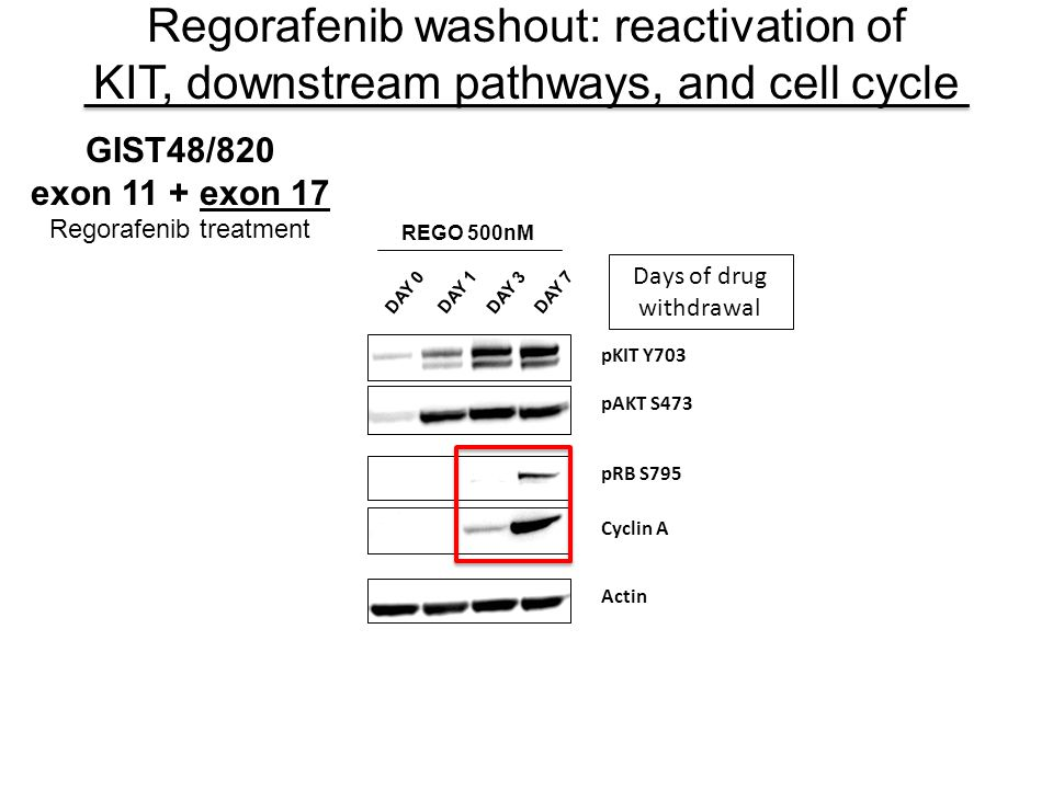 Regorafenib washout: reactivation of