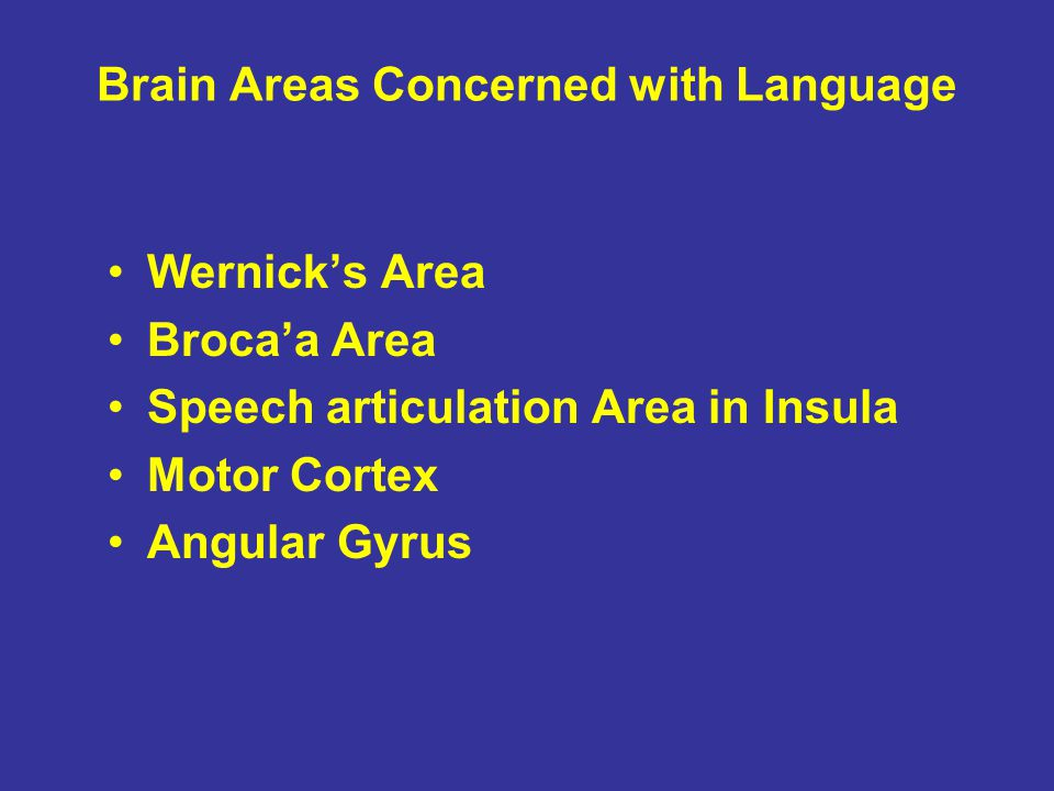 Brain Areas Concerned with Language