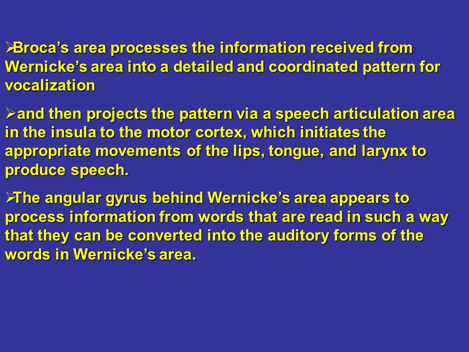 Broca's area processes the information received from Wernicke's area into a detailed and coordinated pattern for vocalization