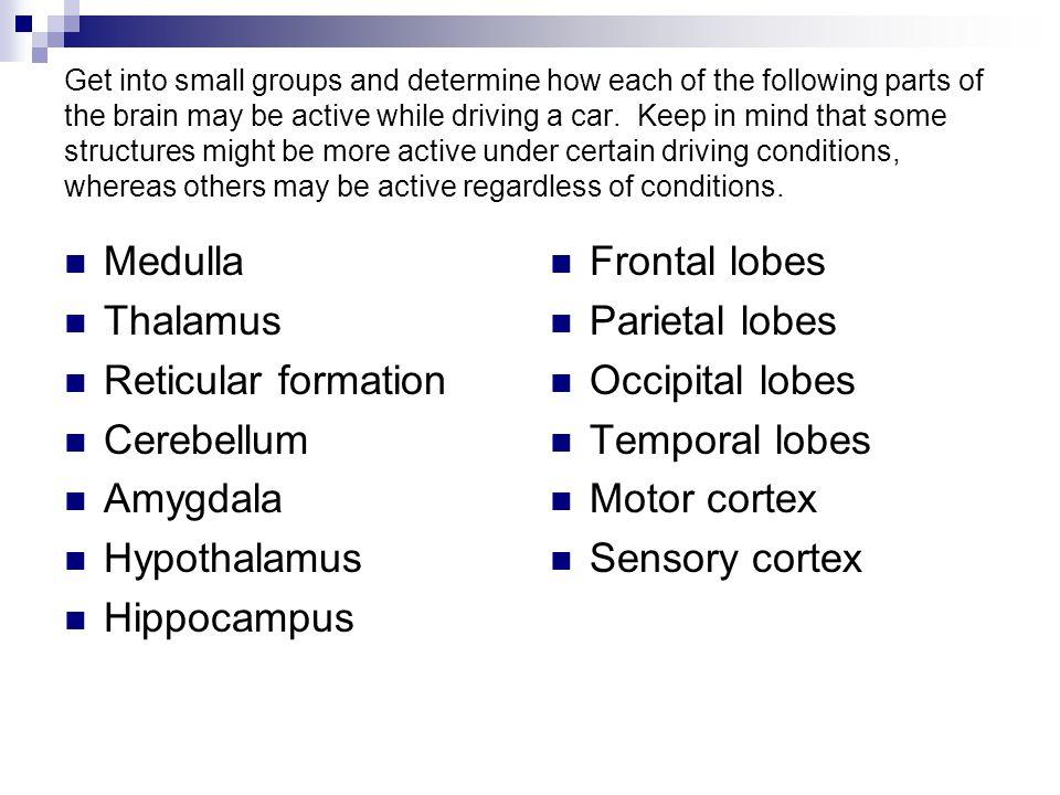 Medulla Thalamus Reticular formation Cerebellum Amygdala Hypothalamus