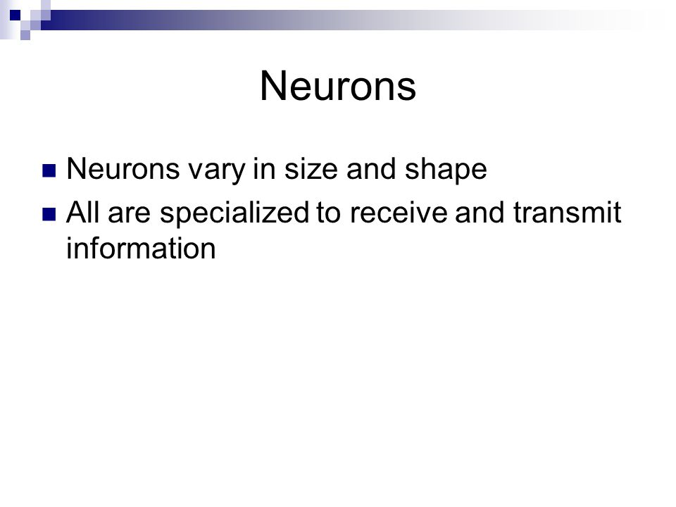 Neurons Neurons vary in size and shape