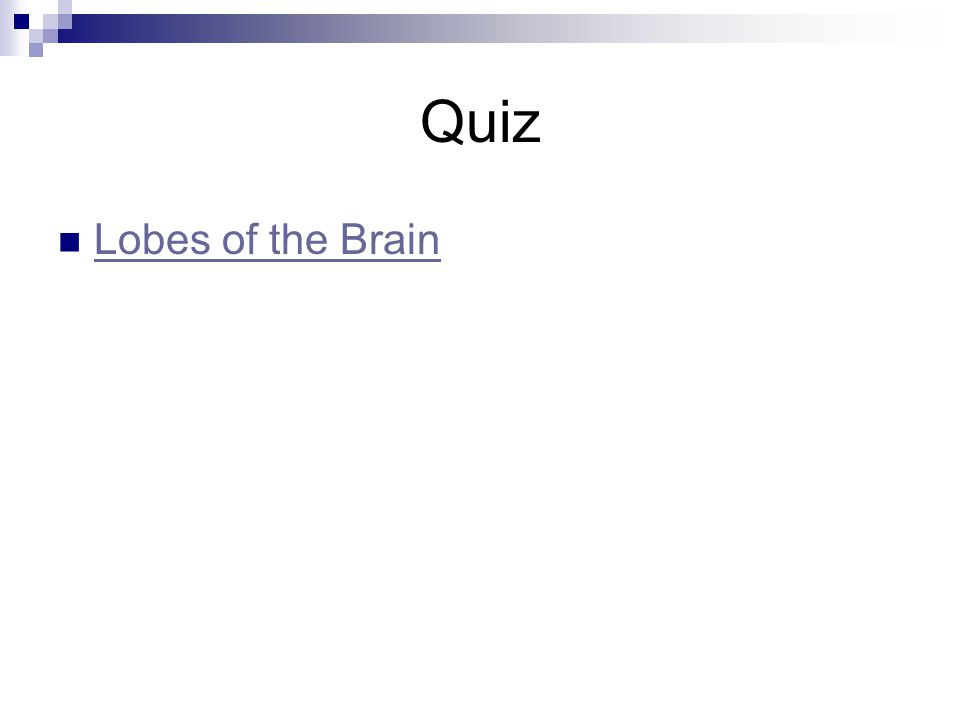 Quiz Lobes of the Brain