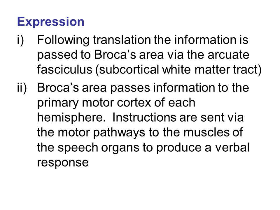 Expression Following translation the information is passed to Broca's area via the arcuate fasciculus (subcortical white matter tract)