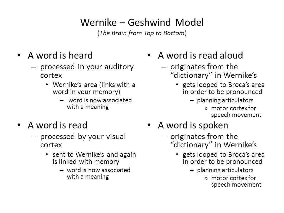 Wernike – Geshwind Model (The Brain from Top to Bottom)