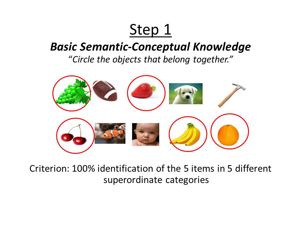 Step 1 Basic Semantic-Conceptual Knowledge