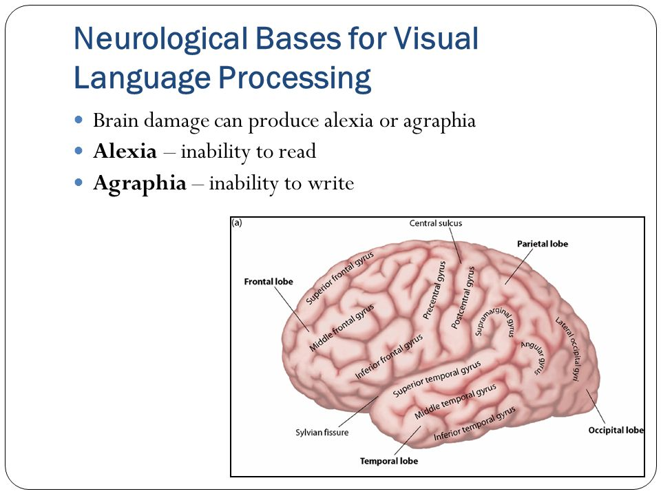Neurological Bases for Visual Language Processing