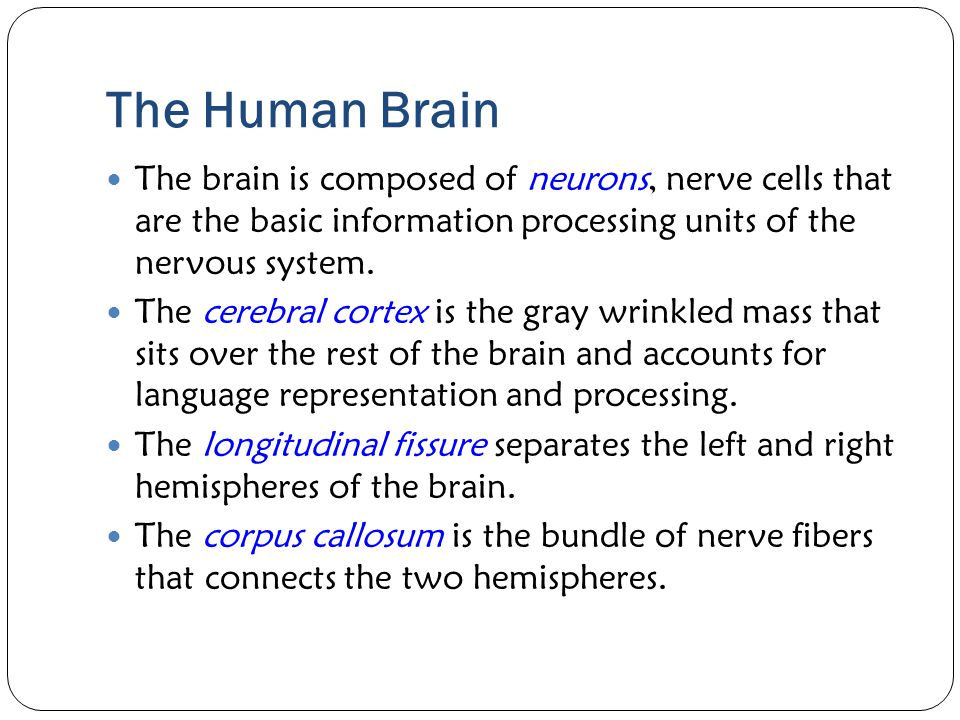 The Human Brain The brain is composed of neurons, nerve cells that are the basic information processing units of the nervous system.