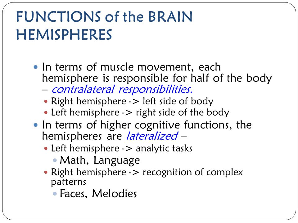FUNCTIONS of the BRAIN HEMISPHERES