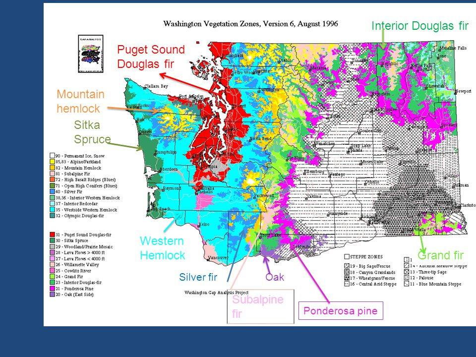 Interior Douglas fir Puget Sound Douglas fir Mountain hemlock Sitka
