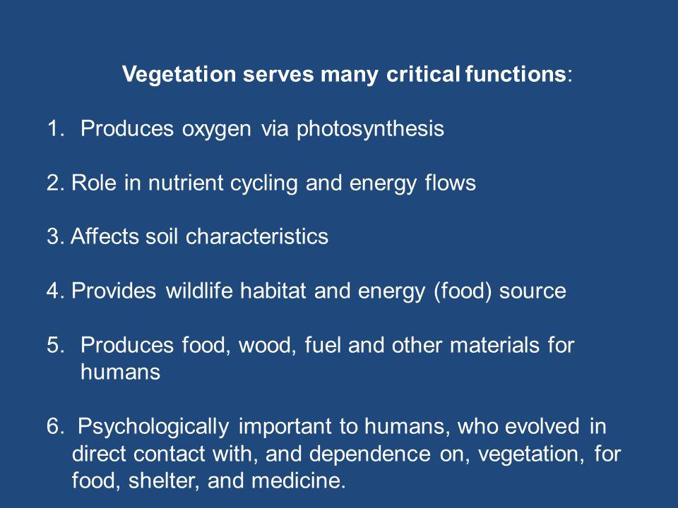 Vegetation serves many critical functions: