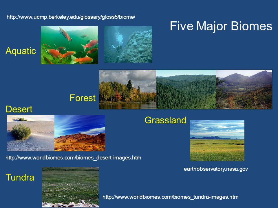 Five Major Biomes Aquatic Forest Desert Grassland Tundra