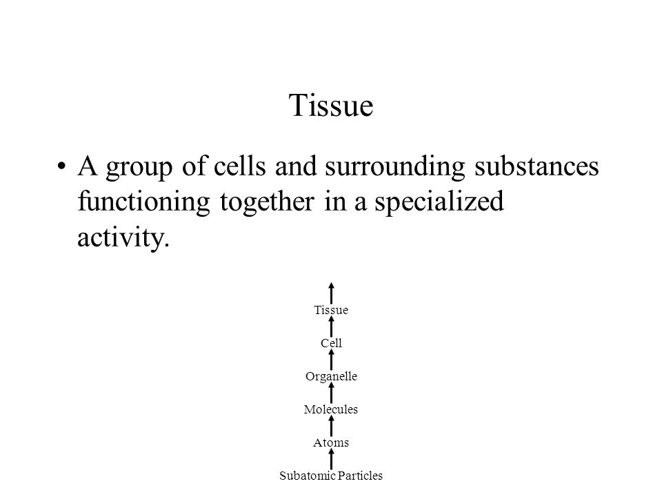 Tissue A group of cells and surrounding substances functioning together in a specialized activity. Tissue.