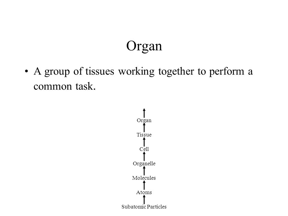 Organ A group of tissues working together to perform a common task.