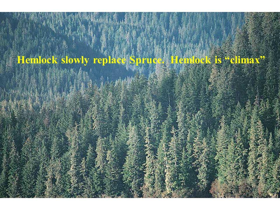 Hemlock slowly replace Spruce. Hemlock is climax