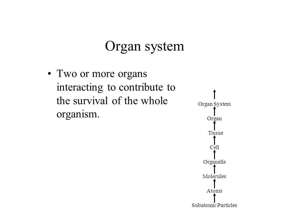 Organ system Two or more organs interacting to contribute to the survival of the whole organism. Organ System.