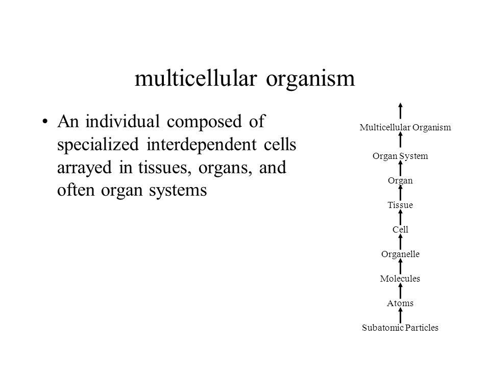 multicellular organism