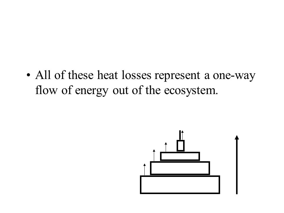 All of these heat losses represent a one-way flow of energy out of the ecosystem.
