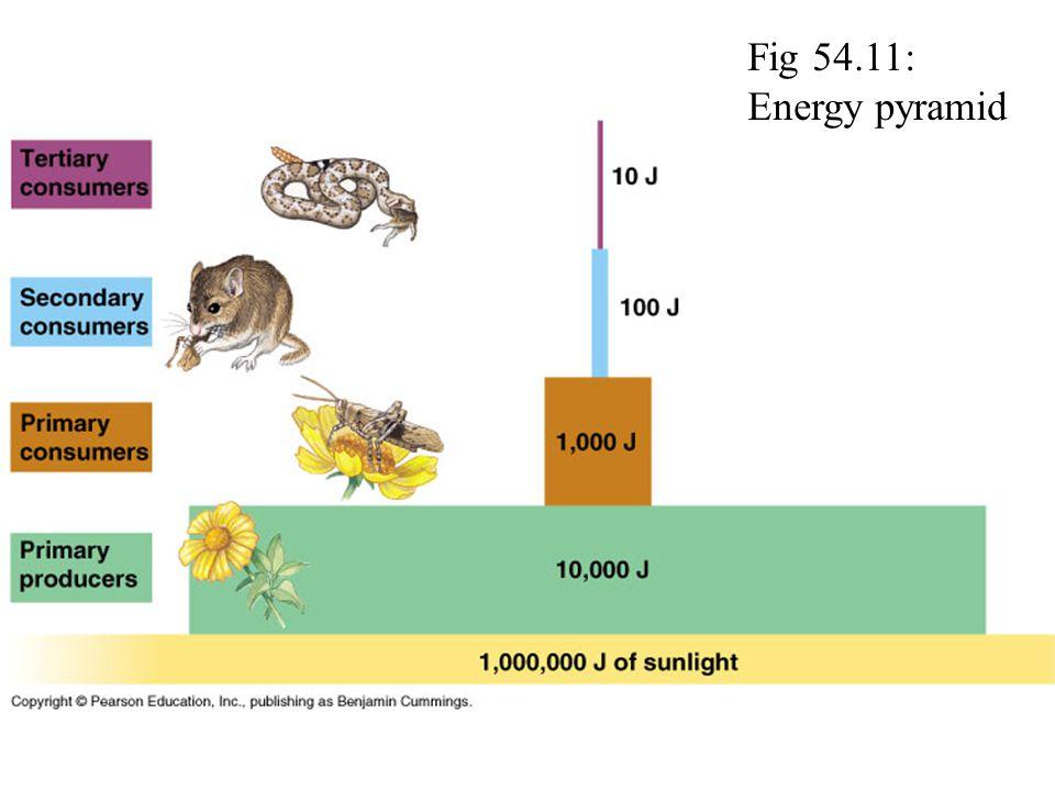 Fig 54.11: Energy pyramid