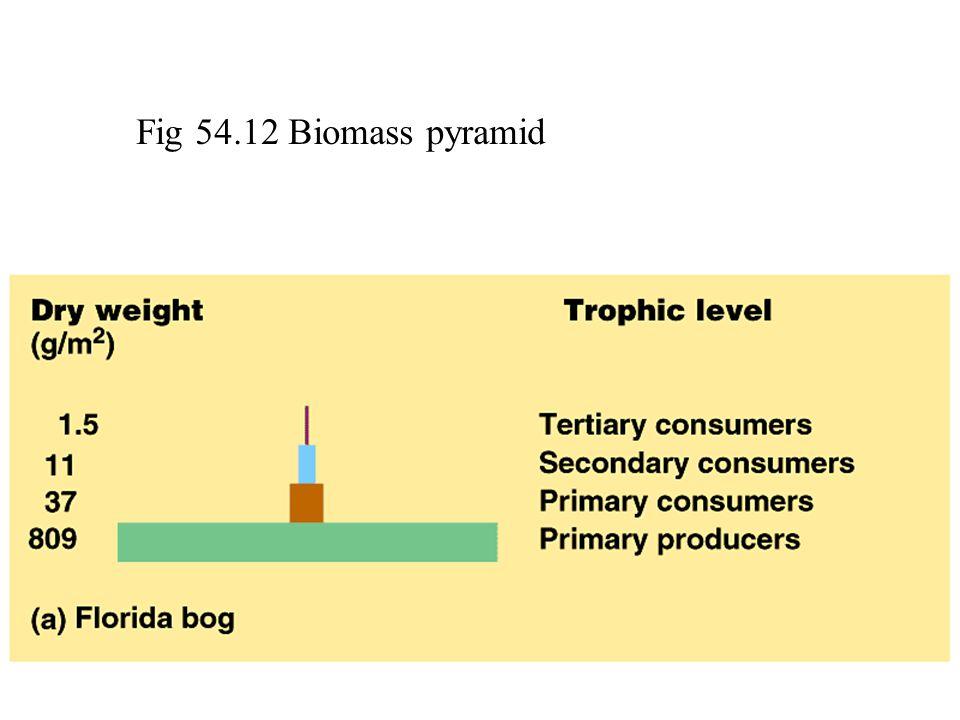 Fig 54.12 Biomass pyramid